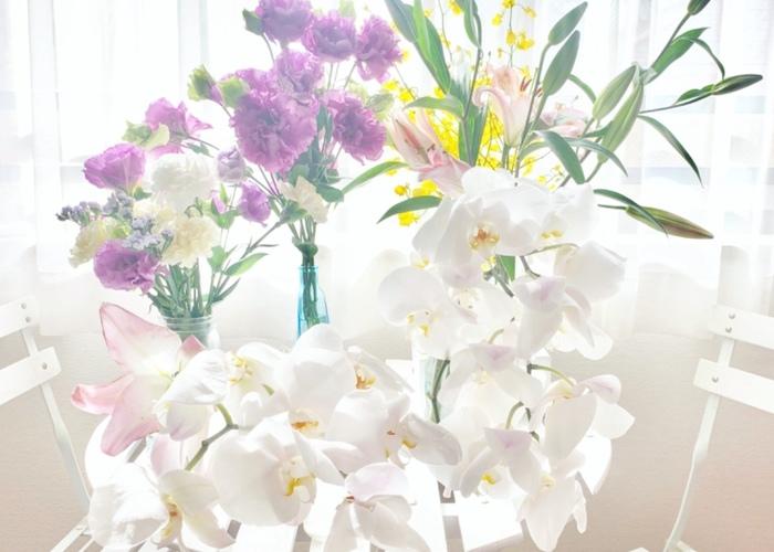 お花いっぱいの幸せな一年にしたい♡1月の誕生花と花言葉リスト*のトップ画像