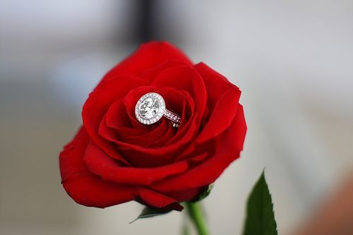 真っ赤なバラは永遠の憧れ♡美しく情熱的な赤いバラがテーマの記憶に残る結婚式*にて紹介している画像