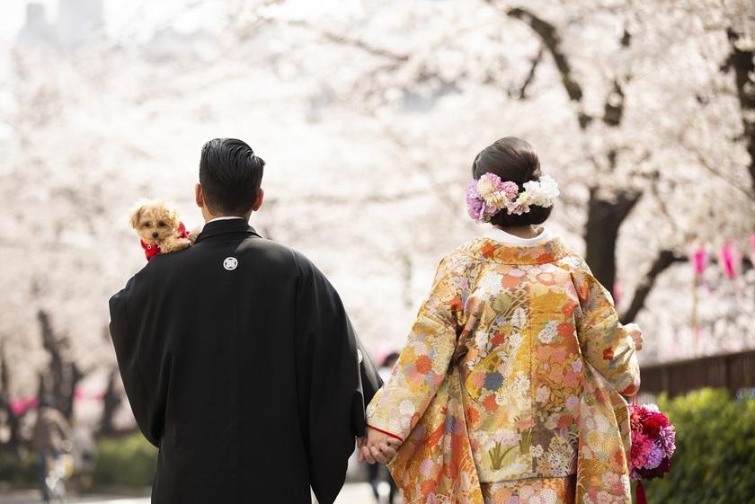 先着20名組限定・全データもらえて138,000円♡まだ間に合う【桜ロケーションフォト】の予約はこちら*にて紹介している画像