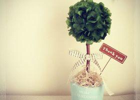『トピアリー』って知ってる?海外風の盆栽のようなインテリアで、ウェルカムスペースや高砂に飾るととっても可愛いんです*