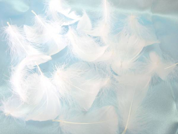 ふわっふわで天使みたい♡羽を舞わせる挙式の演出『フェザーシャワー』が流行りそう*にて紹介している画像